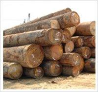 Malaysian Round logs