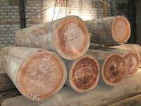 Fresh keruing Round Logs For Plywood And Veneers