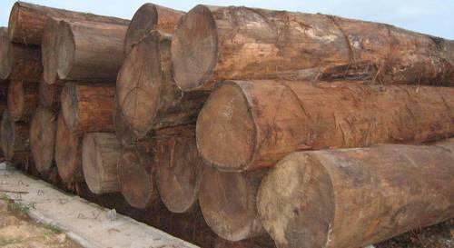 keruing Round logs