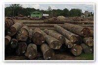 Resak Round logs
