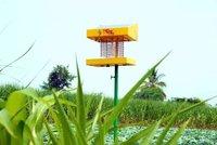 Solar power inset trap