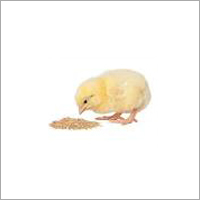 Poultry Feed Grains