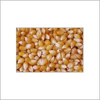 Maize Animal Feed