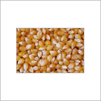 Maize Animal Feed