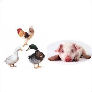 Universal Multi-Vitamin for Livestock