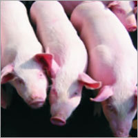 Livestock Feed Additives