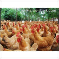 Multi Vitamin Premix for Chicken