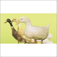 Compound Feed Premix for Poultry