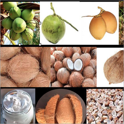 Coir Pith Cocopeat Products