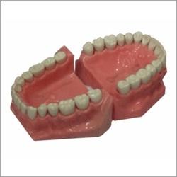 API Teeth Set