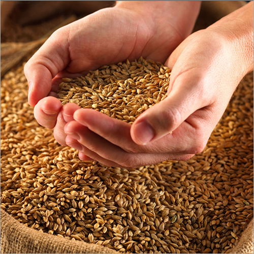 Animal Feed Grains