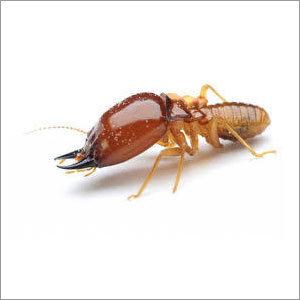 Termites Control