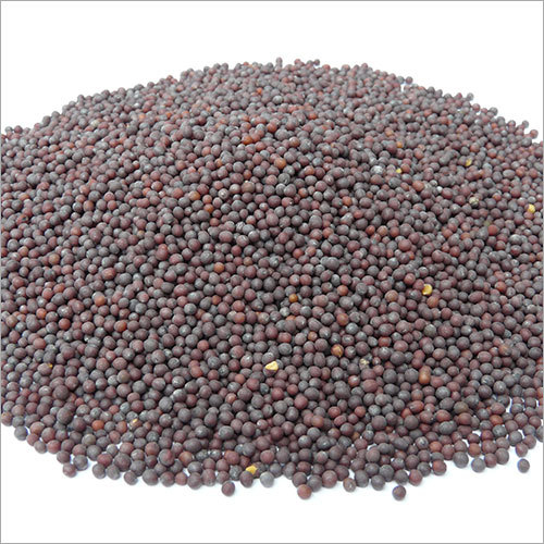 Black Mustard Seeds (Rai)