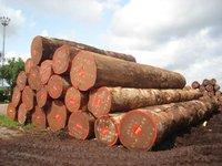 Limbali wood