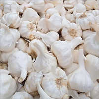 Rajasthani Garlic