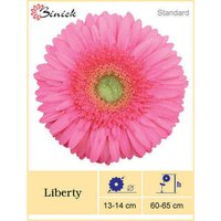 Liberty Gerbera Plants