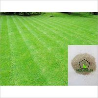 Bermuda Grass Seeds For Soil Erosion