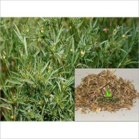 Grass  / Fodder / Forage Seeds