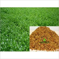Multi Cut Alfalfa Grass Seeds