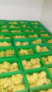 Banana Ripening Chambers 20 x10 x 10