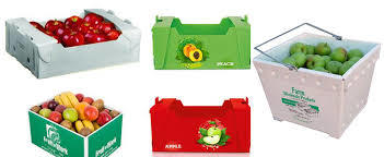 Plastic Corrugated Snow Pea Box