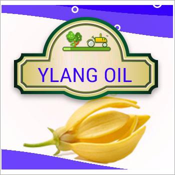 Ylang Oil