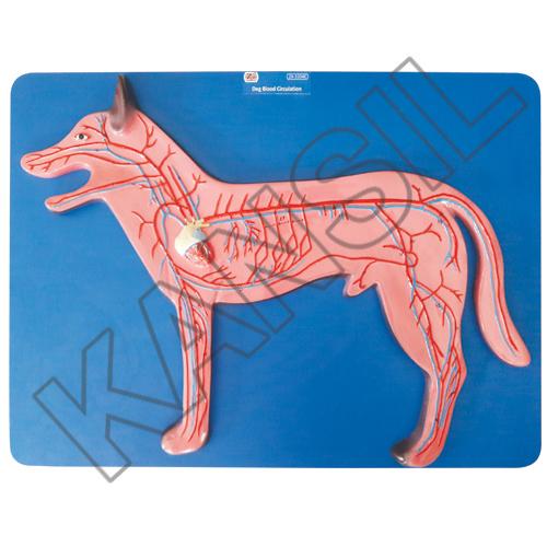 Dog Blood Circulation Model