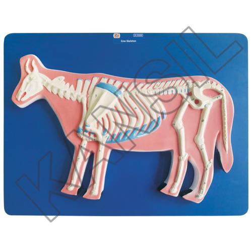 Cow Skeleton Model