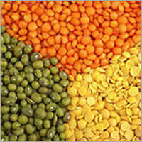 Green- Red- Brown- Yellow Lentils