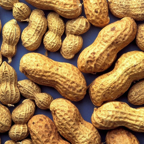 Shell Groundnut