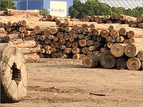 Timber Pine Logs