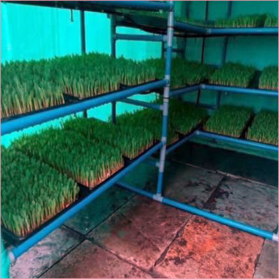 Hydroponic Green Fodder Unit 120 kg