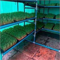 Hydroponic Green Fodder Unit