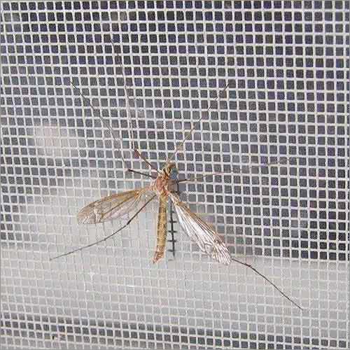 Galvanized Mosquito Mesh