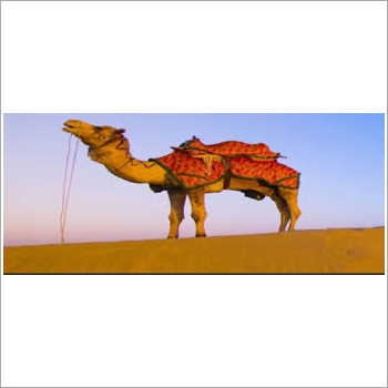 Rajasthan Tour Package Services