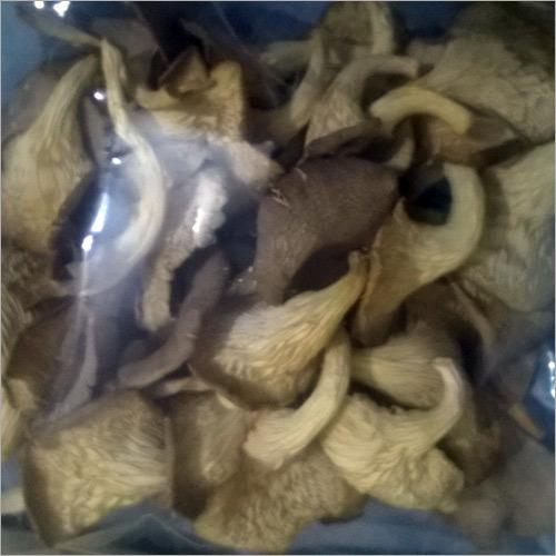 Tuffln Oyster Mushroom