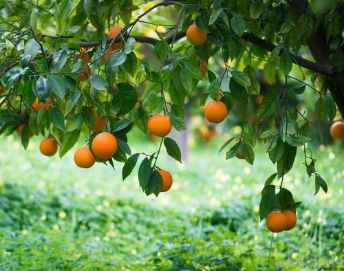 Horticulture Plants Services