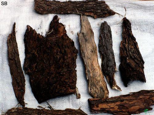Neem Bark Azadirachta Indica
