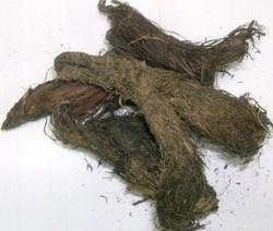 Jatamasi Herbal Extract