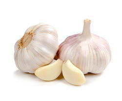 Garlic Extract (5:1)