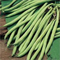 Hybrid Bean Seeds