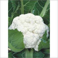 Hybrid Cauliflower Seeds
