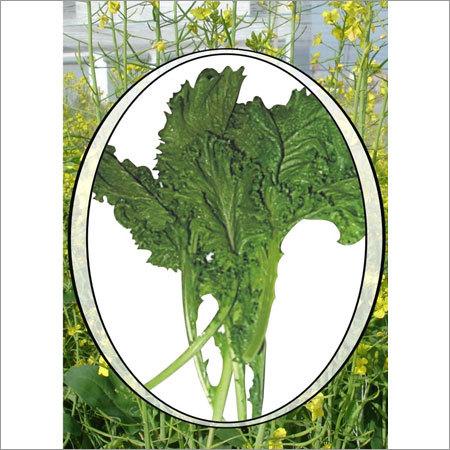 Hybrid Mustard Seed