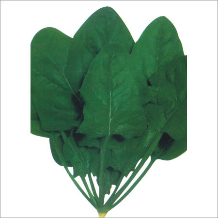 Fresh Spinach Seeds