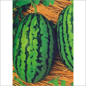 Open Pollinated Watermelon Seeds
