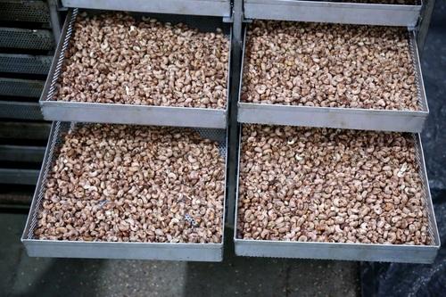 Cashew Nut NW