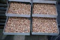 NW Cashew Nut
