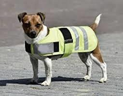 Dog Rugs & Blankets
