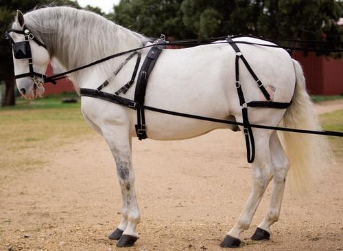 Nylon Horse Harness