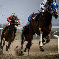 Horse Track Sand